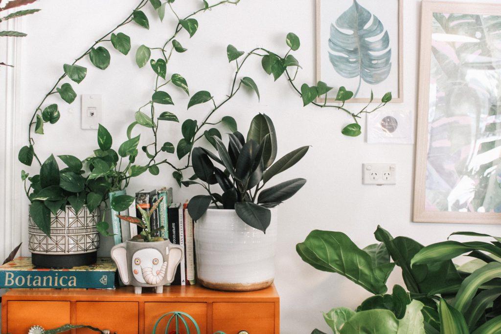 migliori piante in appartamento
